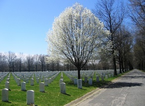 Picture of Beverly National Cemetery